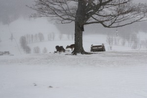 Deer in blizzard small