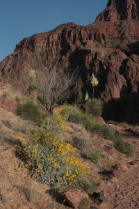 Desert blooms at the top of Devil's Corkscrew